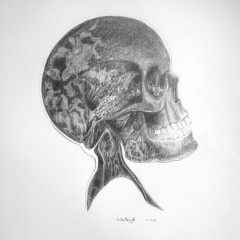skull/crâne 1 - 50 x 32 cm